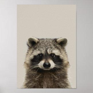 Poster Affiche de crèche d'animaux de bébé - Racoon