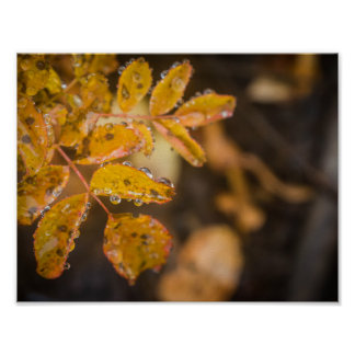 Poster Affiche de feuille d'automne