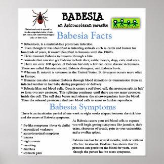 Poster Affiche de feuille de données de l'information de