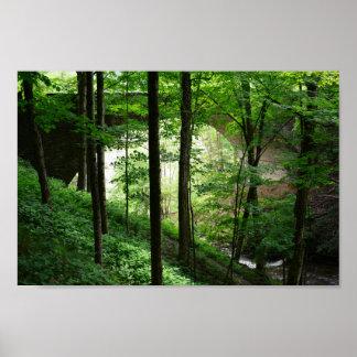 Poster Affiche de forêt de vert de voûte de pont