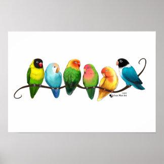 Poster Affiche de perruches