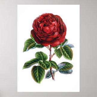 Poster Affiche de rose rouge