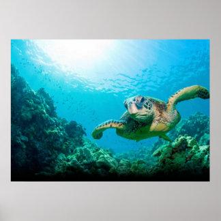 Poster Affiche de tortue de mer