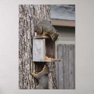 Poster Affiche d'écureuil