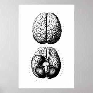 Poster Affiche d'illustration d'anatomie de cerveau