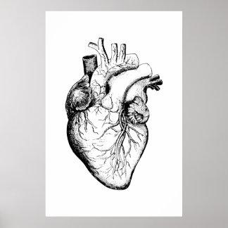 Poster Affiche d'illustration d'anatomie de coeur