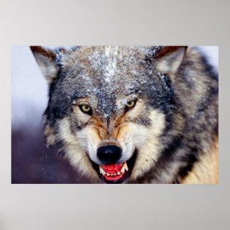 Poster Affiche effrayante de loup