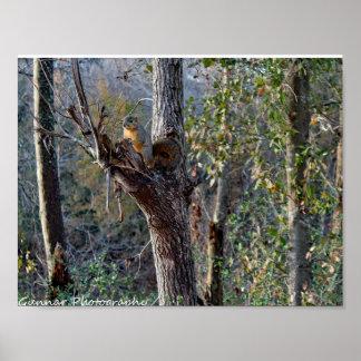 Poster Affiche extérieure d'écureuil de faune de