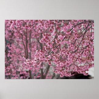 Poster Affiche japonaise rose débordante de fleurs de