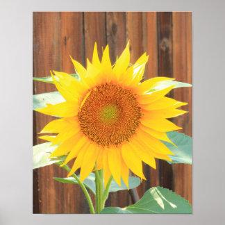 Poster Affiche jaune de tournesols