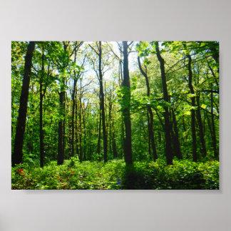 Poster Affiche magique mystérieuse de forêt