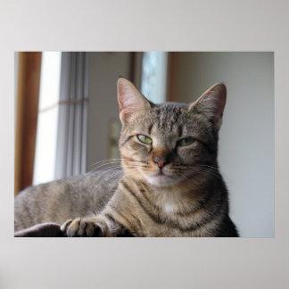 Poster Affiche mignonne de chat de chaton (brumeuse)