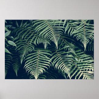 Poster Affiche minimaliste de fougère de paradis