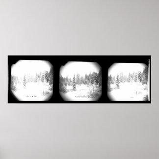 Poster Affiche noire et blanche de pins de Milou belle
