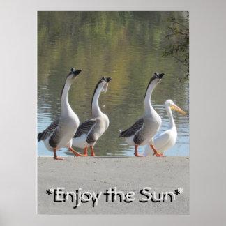 Poster Affiche - oies affectueuses de Sun