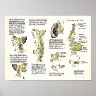 Poster Affiche Osteopathic de nerf de chaîne