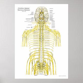 Poster Affiche spinale d'anatomie de chiropractie de