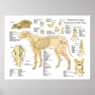 """Poster Affiche squelettique 18"""" d'anatomie de chien X 24"""""""