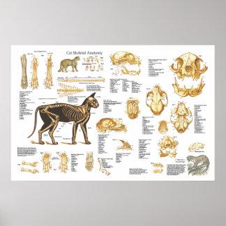 """Poster Affiche squelettique féline 24"""" d'anatomie de chat"""