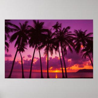 Poster Affiche tropicale pourpre du coucher du soleil 1