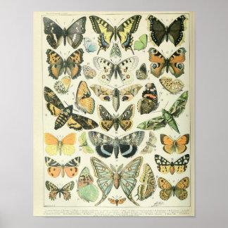 Poster Affiche vintage de papillon