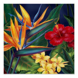 Poster Affiches florales hawaïennes de paradis tropical