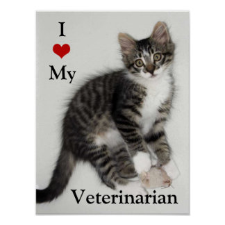 Poster Aimez mon affiche de Veterarian Zorro Kitty