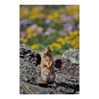 Poster Alerte d'écureuil moulu pour le danger