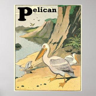 Poster Alphabet de livre d'histoire de pélican