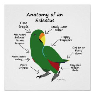 Poster Anatomie d'une affiche d'Eclectus
