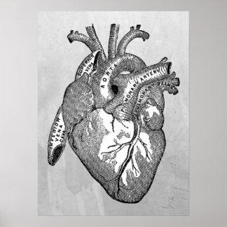Poster anatomie vintage de coeur