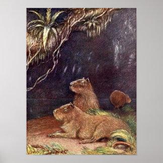 Poster Animaux sauvages vintages, Capybara par Louis