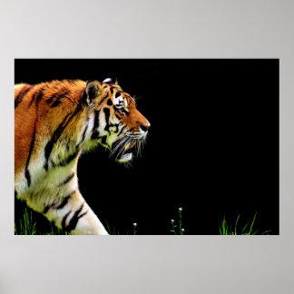 Poster Approche de tigre - illustration d'animal sauvage