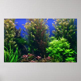 Poster Aquarium pour l'arrière - plan d'aquarium