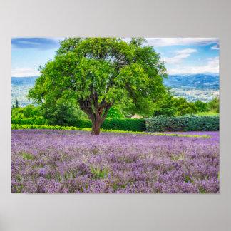 Poster Arbre dans le domaine de lavande, France