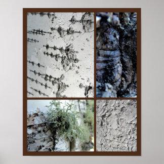 Poster Arbre de bouleau beaucoup de textures