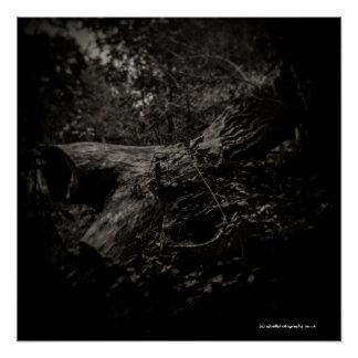 Poster Arbre mort - affiche d'art - appareil-photo de