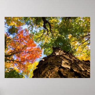 Poster Arbres colorés d'automne