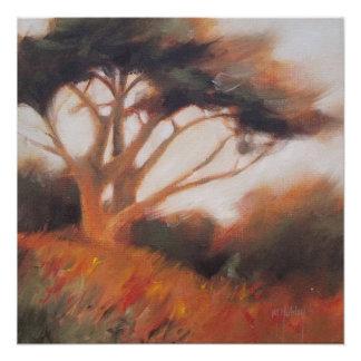 Poster Arbres de la Californie Monterey Cypress