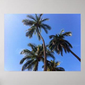 Poster Arbres de noix de coco dans Kihei, Maui, Hawaï