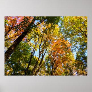 Poster Arbres pipe% colorés de l'automne 2017 %