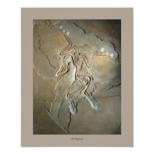 Poster Archaeopteryx