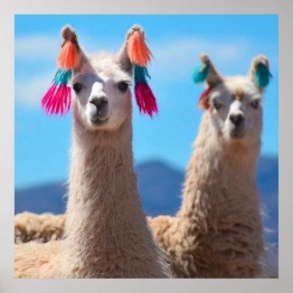 Poster Art d'affiche de lama