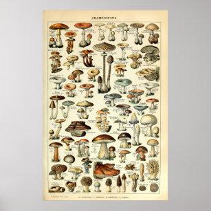 Poster Art de champignon du cru 1909 par Adolphe Millot