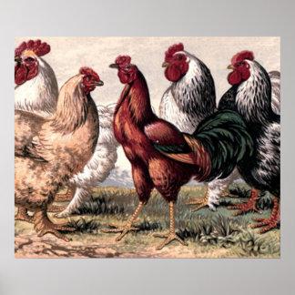 Poster Art vintage de mur de pays de coqs et de poulets