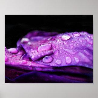 Poster Baisses de pluie de photographie de nature sur la