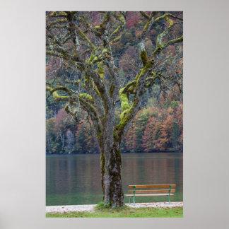 Poster Banc tranquille le long d'un lac, Allemagne