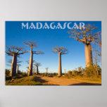 Poster Baobabs de Madagascar