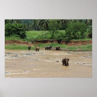 Poster Bath d'éléphant - orphelinat d'éléphant de