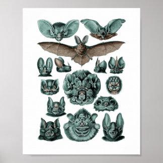 Poster Battes par Ernst Haeckel